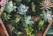 • Succulents •