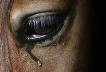 Animals crying