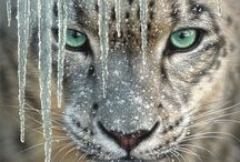 Beautiful Animals / by Dolores Rafferty