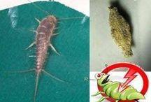 Como eliminar insetos