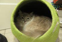 Designer Cat Beds