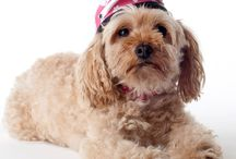 Prima Dog's Helmet for Cats & Dogs