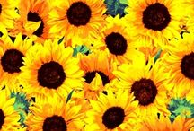 Pocket Full of Sunshine / Create something bright and cheerful with these sunflowers fabrics.