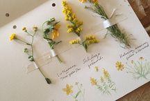 Tumblr fiori