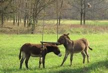 Farmgirl Fare Donkeys / by Farmgirl Fare