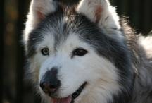 Taysia Blue - the Dog
