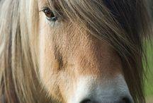 Koně a jejich svět / koně a jezdectví, stáje a výběhy