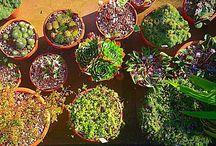 Cactus, flowers, garden.