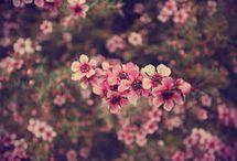 Fleurs Tumblur