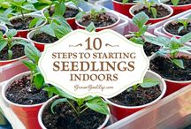 Gardening knowledge / Information about seeds, planting and gardening tips and tricks