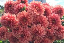 ~flowers