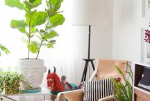 fiddle fig / by Lisa Shipman