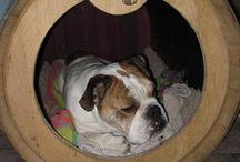 Barrel Doghouses