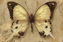 Butterflies / Papillons