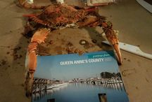 Queen Anne's County