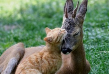 Fun Animal Photos! / by Mary Pulsifer Pszonak