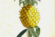 Pineapple / by Paper Haveli