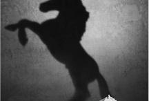 Yr 10 Shadows and Reflection