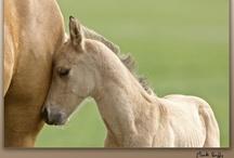 Magnificent Horses ...for Zara