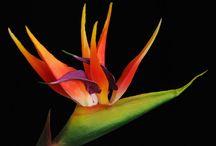 Flowers / Dell'effimero, direbbe il Piccolo Principe.
