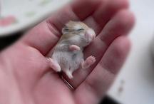 Cute animals / Süße Bilder von (Baby) Tieren // Cute pictures of (baby) animals