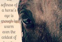 Horses / Awwww
