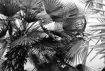 PLANT LIFE / by Linda Ketelhut