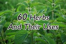 Herbs. plant. used for