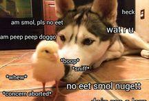 heckin good doggos