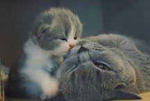 animales ❤