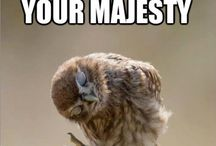 Owls / Funny, Expressive & Beautiful