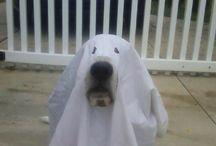 Basset hound / Perros