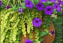 Yard - Plants