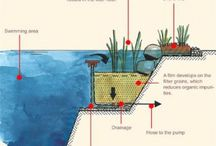 vasca piante