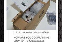 Just Cat :D