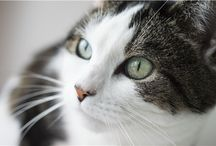 Sponsor a Cat / View the cats available for sponsorship at one of Cats Protection's centres.