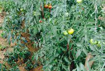 Gardening / i also have garden so i am interested in gardening