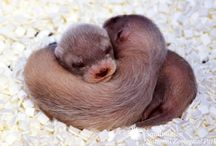 Otters / by Roxanne Rossbach