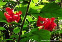 Flores silvestres de Colombia / Colombia es el país con la tasa más alta de especies de flora por unidad de área en todo el mundo. Colombia, es el hogar de más de 130.000 especies de plantas. Hay poco más de 300.000 especies de plantas en el mundo, es decir, Colombia tiene casi la mitad de ellas. En Paraísos de Colombia evidenciamos en nuestros recorridos la gran variedad de flores que encontramos en el camino.