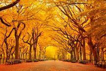 Желтый, оранжевый, солнечный... / желтый цвет - это радость, это цвет солнца... давайте радоваться вместе