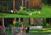 lifestyle /small farm holdings / lessons in how to be self sufficient,