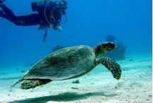 Dive In! / Diving in Loreto