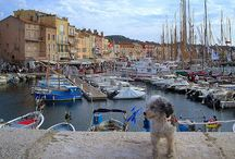 Dogs in Provence / My favorite photos of dogs in Provence