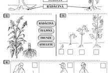 plante si animale