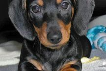 Little Daxi's <3 / Things I like, including pink, puppies, glitter, etc :)