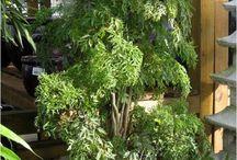 Houseplants/Greenhouse