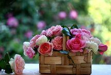 Rosas na cesta