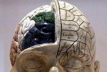 Brain / by Ilona Fritsch