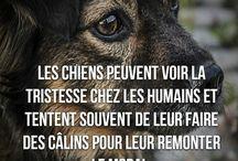 chiens d'amour