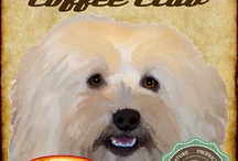 Coffee, Cupcakes & Havanese / We have a Havanese named Pixel / by Sandy Smith